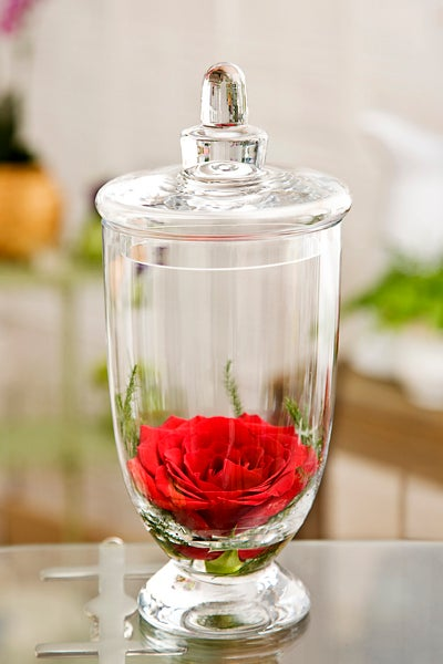 Rose in Apothecary Jar