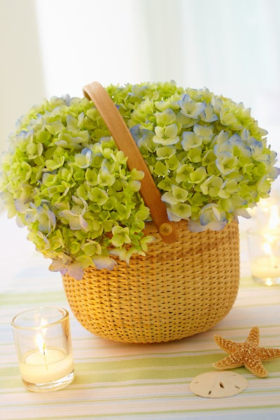 Green Hydrangeas in a Nantucket style basket