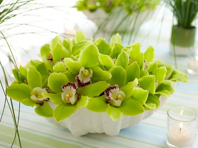 Green Cymbidium Orchids in a Shell Vase