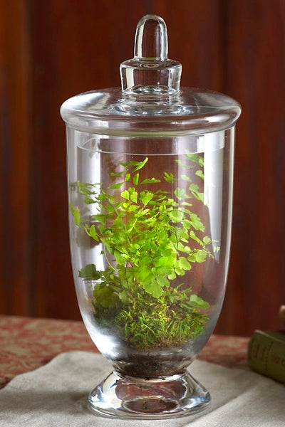 Grass Green Arrangement Enclosed in Clear Vase