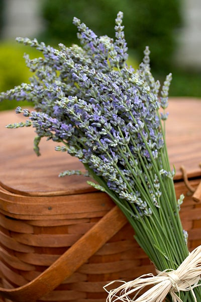A Bundle of Lavender Tied Next to Picnic Basket