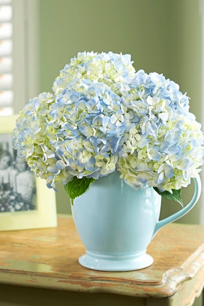 Blue Pitcher With Hydrangeas