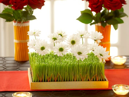 Pushing Daisies - Daisies and wheat grass center piece