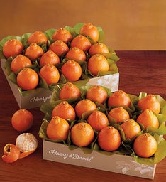 Harry and David® Cushman's® Florida HoneyBells