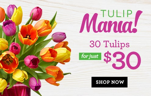 30 Tulips, Just $30