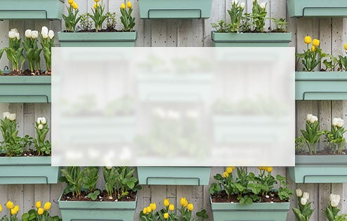 Potted Bulbs