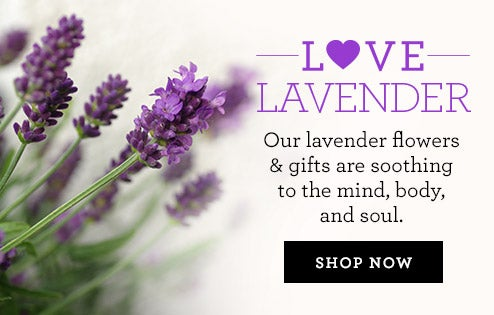 Love and Lavendar