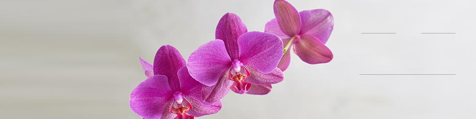 orchid plants and orchid