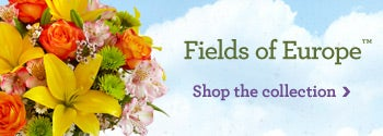 Shop our Fields of Europe Collection