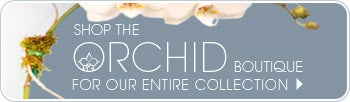 Shop the Orchid Boutique