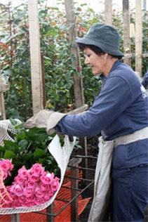 Fair Trade Flower Worker