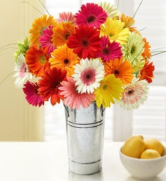 Gerbera Daisy Bouquet, 12-24 Stems