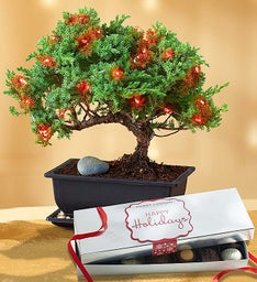 Merry Christmas Bonsai + Free Candle