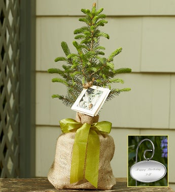Colorado Blue Spruce Tree for Sympathy Large with Plaque