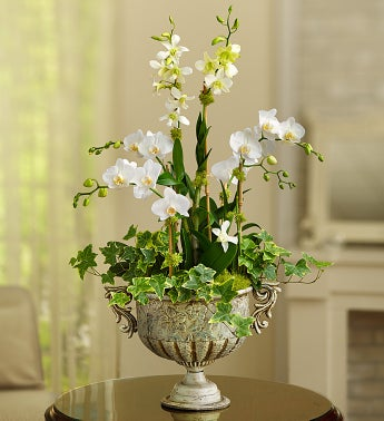 Luxurious Orchid Garden