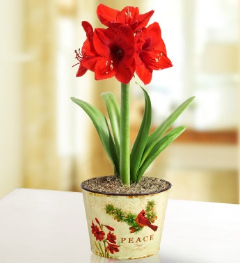 December's Bulb of the Month