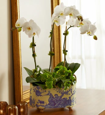 English Garden Orchid for Sympathy