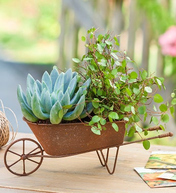 Succulent Wheelbarrow