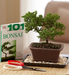 Bonsai Beginner's Set