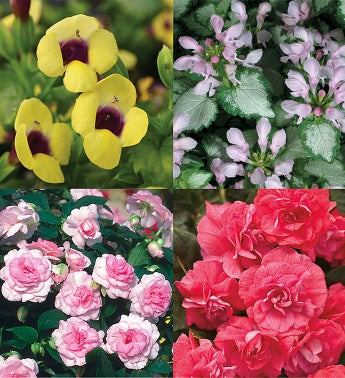 Proven Winners® Shade Garden 4-Pack