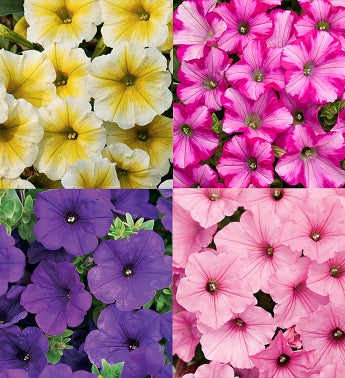 Proven Winners® Supertunia® Assorted 4-Pack