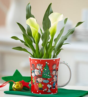Charlie Brown® Christmas Calla Lily