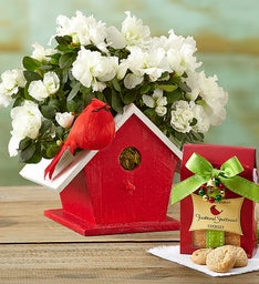 Birdhouse of Blooms™ for Christmas