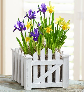 Picket Fence Garden