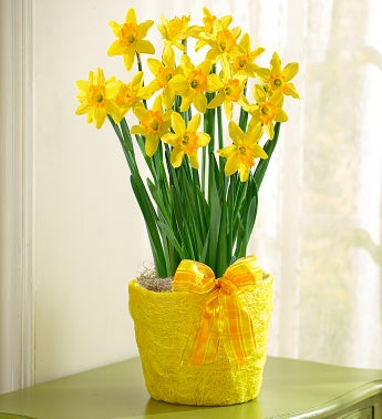 February's Bulb of the Month