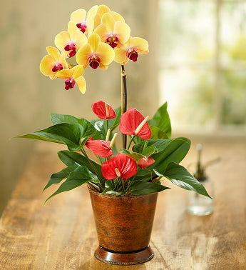 Stunning Orchid with Anthurium