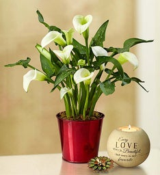 Romantic Love Calla Lily