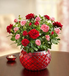 Valentine's Day Pink and Red Rose