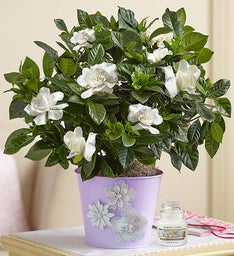 Graceful Gardenia for Mom