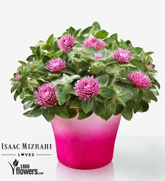 For Keeps - Pink Zazzle by Isaac Mizrahi