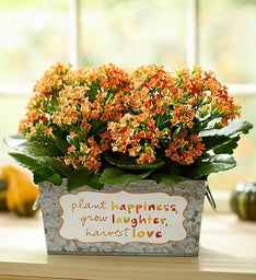 Harvest Love Blooms