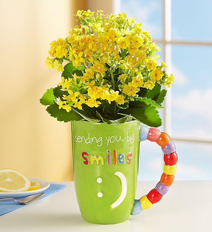 Mugable® Full of Blooms Plant