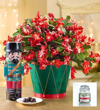 Christmas Cactus + Free Candle