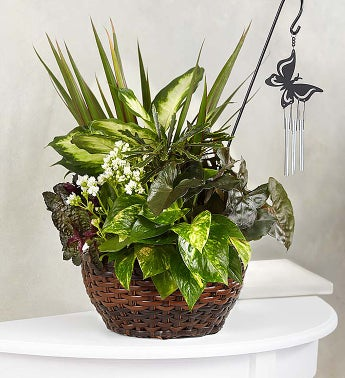 butterfly chime dish garden for sympathy - Dish Garden Plants