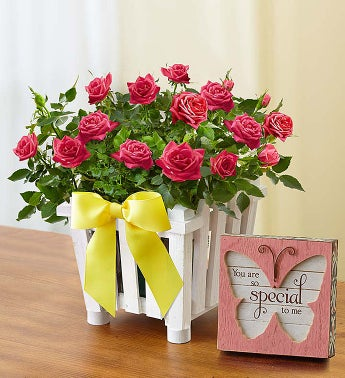 Charming Rose Garden Small with Plaque