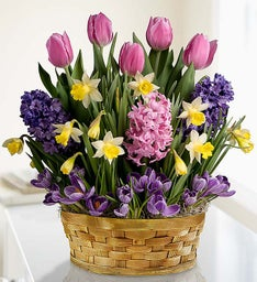 Blooming Basket of Bulbs + Free Gloves