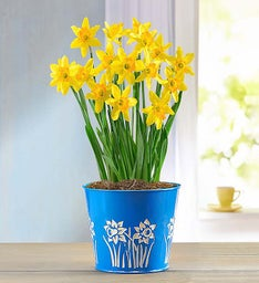 Easter lily delivery easter plants delivery 1800flowers easter plants negle Choice Image