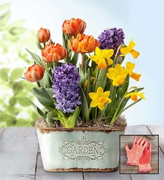 Bountiful Blooms Bulb Garden + Free Gloves