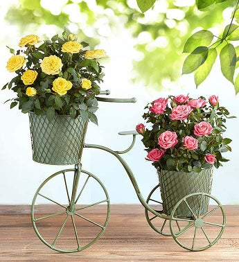 Bicycle of Blooms