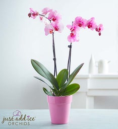 Precious Pink Orchid + Free Shipping