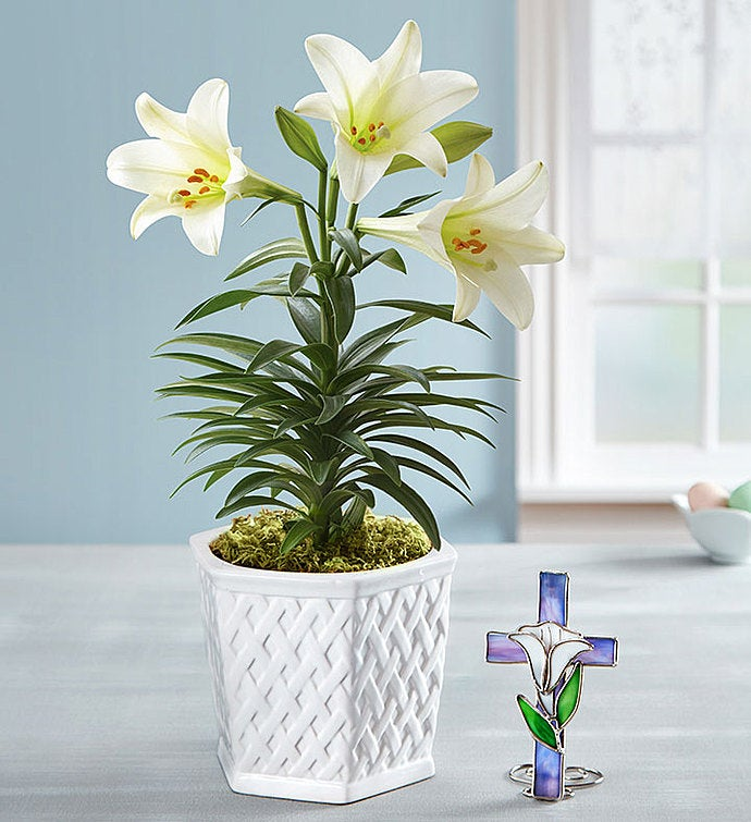 Easter Blessing Lily