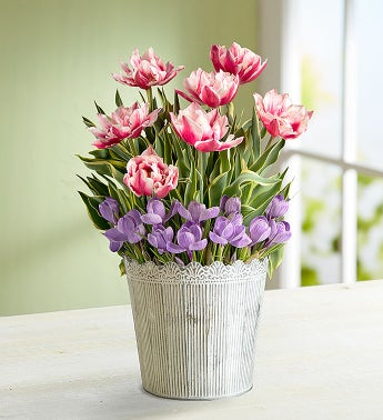 March's Bulb - Springtime Tulip and Crocus Garden