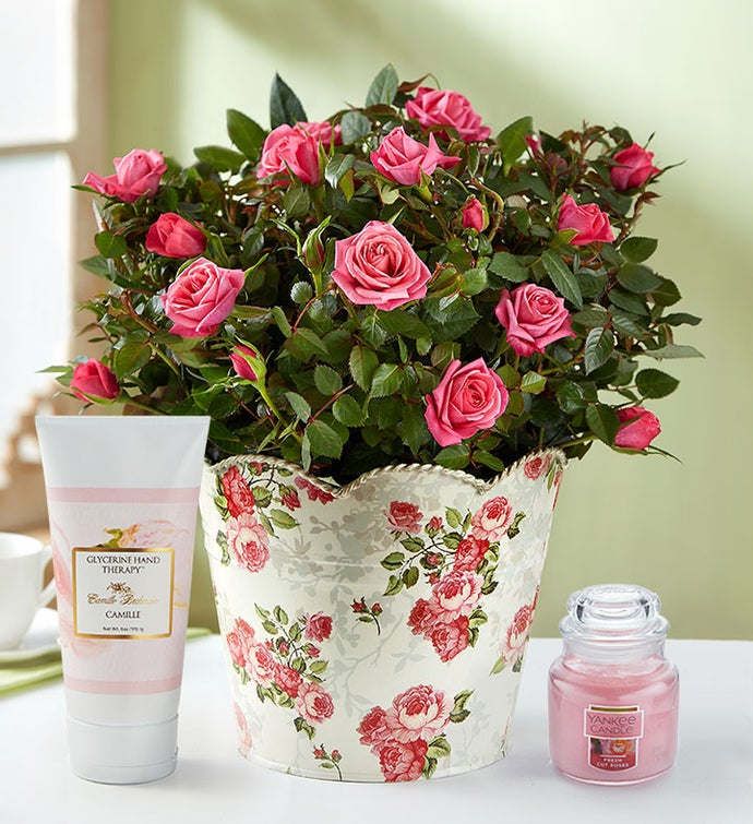 Classic Budding Rose Bouquet Large with Candle & Lotion