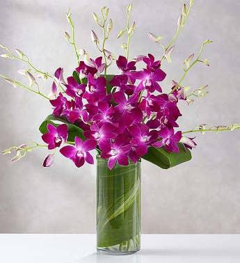 Purple Flowers & Floral Arrangements | 1-800-FLOWERS.COM