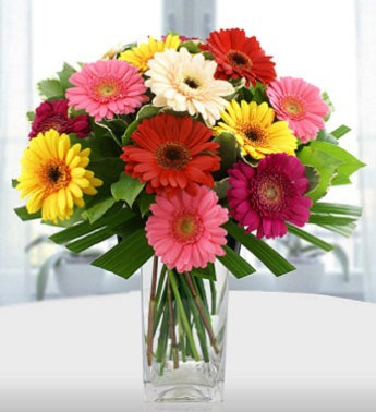 Gorgeous Gerberas