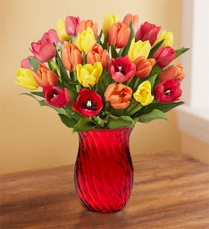 Assorted Fall Tulips + Free Shipping